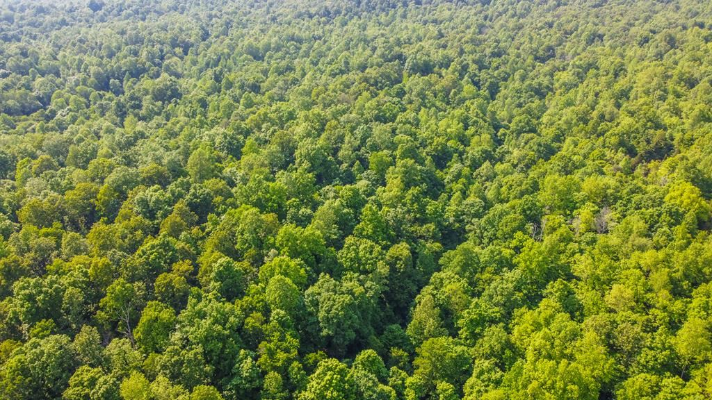 Photo of 2561 Hwy 261, Fordsville, KY 42343 (MLS # 81543)