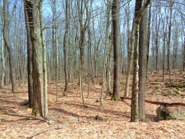 Photo of 1323 View Dr, Greentown, PA 18426 (MLS # 15-4330)