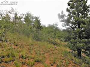 Photo of 113 Buckhorn Road, Cripple Creek, CO 80813 (MLS # 4978014)