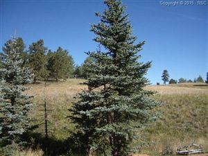 Photo of 307 Pinaceae Heights, Divide, CO 80814 (MLS # 5166066)