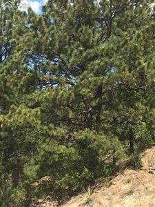 Photo of 168 & 180 Gitchigoomee Trail, Woodland Park, CO 80863 (MLS # 6328232)