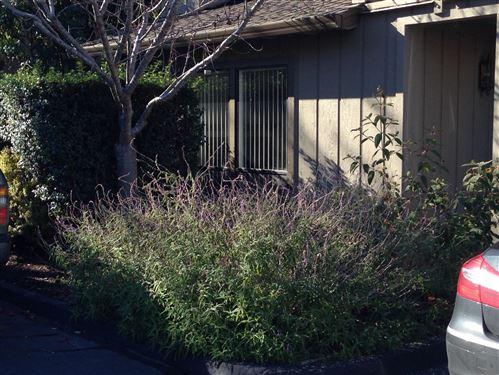 Tiny photo for 6170 Sheraton Place, APTOS, CA 95003 (MLS # ML81861123)