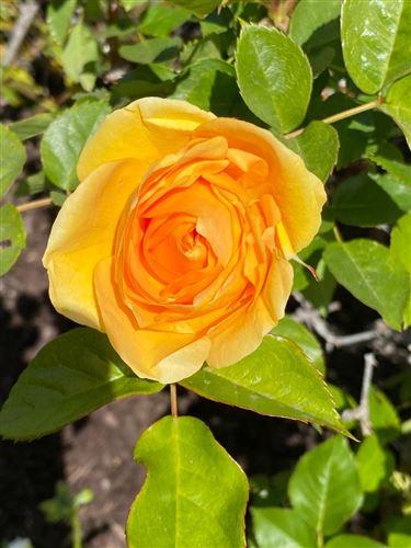 Tiny photo for 1284 Toyon Drive, MILLBRAE, CA 94030 (MLS # ML81840493)