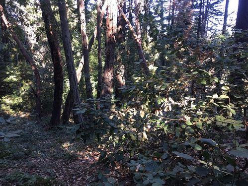Photo of - Mountain Charlie RD, LOS GATOS, CA 95033 (MLS # ML81819775)