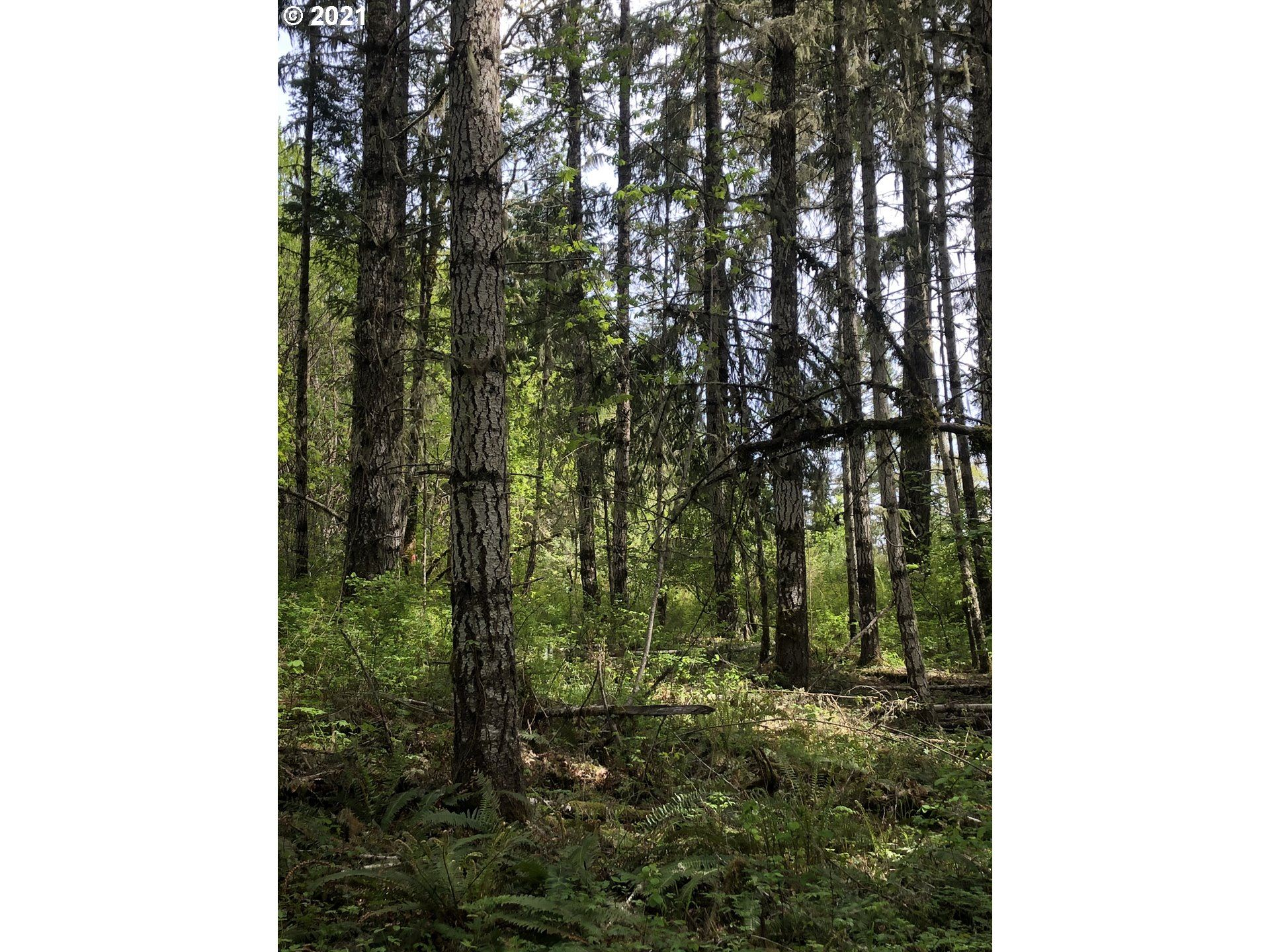 Photo of Old Military RD, Sheridan, OR 97378 (MLS # 21654542)