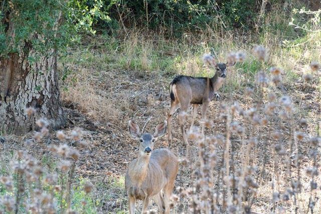 Photo of 21430 Bresa De Loma Drive, Escondido, CA 92029 (MLS # NDP2112040)