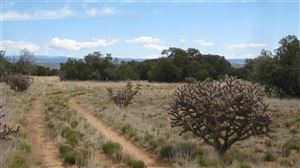 Photo of 45 Grenfell Ranch Road   80 Acres, Cerrillos, NM 87010 (MLS # 201701975)