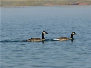 Tiny photo for 45 Waterfront Place, Buffalo, WY 82834 (MLS # 19-508)