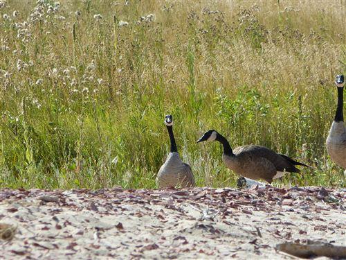 Tiny photo for Lot 32 Shoreline Drive, Buffalo, WY 82834 (MLS # 19-524)