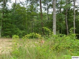 Photo of 376 Summer House Hollow Rd 8.56 acres, Del Rio, TN 37727 (MLS # 224494)