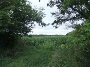 Photo of 28.29 Ac Traut Rd, Rio, WI 53960 (MLS # 1868526)