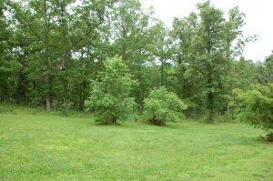 Photo of Tbd State Route Bb, West Plains, MO 65775 (MLS # 60139672)