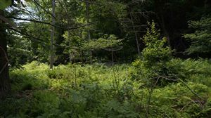 Photo of (Lot 1) State Route 55, Neversink, NY 12765 (MLS # 41796)