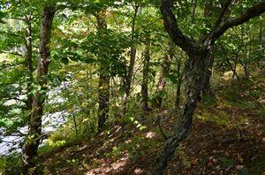 Photo of 13 Mile Road, Bear Lake, MI 49614 (MLS # 19049322)