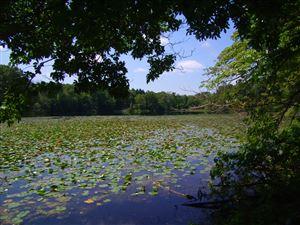 Photo of Birch Lakeshore Drive, Vandalia, MI 49095 (MLS # 18044574)