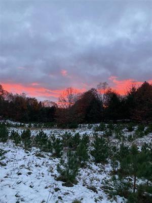 Photo of 8589 Maidens Road, Bear Lake, MI 49614 (MLS # 21106583)