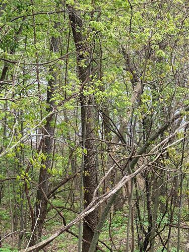 Photo of Forest Shores, Cassopolis, MI 49031 (MLS # 21016609)