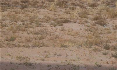 Photo of 0 Highway 6, Los Lunas, NM 87031 (MLS # 677213)