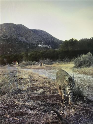 Tiny photo for 19 & 23 DINOSAUR Road, Stanley, NM 87056 (MLS # 989743)