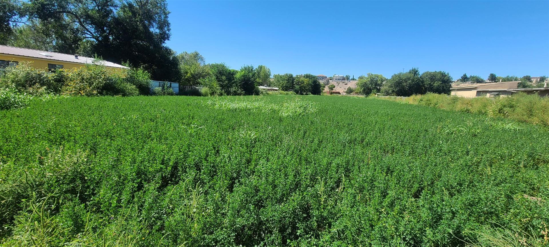 Photo for FOOTHILL Drive SW, Albuquerque, NM 87105 (MLS # 1001790)