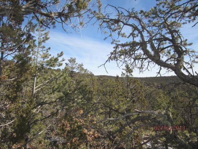 Photo for 12 Twin Tree Court, Cedar Crest, NM 87008 (MLS # 909801)