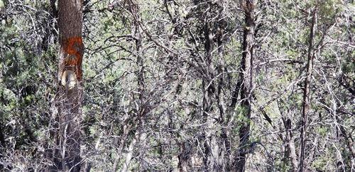 Photo of 5 CEDAR HILL Drive, Cedar Crest, NM 87008 (MLS # 989857)