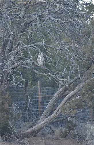 Tiny photo for 11 EXPRESS Boulevard, Sandia Park, NM 87047 (MLS # 989946)