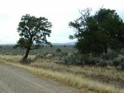 Tiny photo for LOT 33 SERVILLETA, TRES PIEDRAS, NM 87571 (MLS # 25020)
