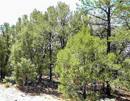 Photo of Lower Pinabete Road, Questa, NM 87556 (MLS # 106290)