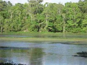 Photo of 6 St Marks Rise Road #-, ST MARKS, FL 32327 (MLS # 312643)