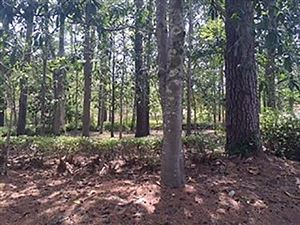 Photo of 429 Lacy Woods Court, TALLAHASSEE, FL 32312 (MLS # 295834)