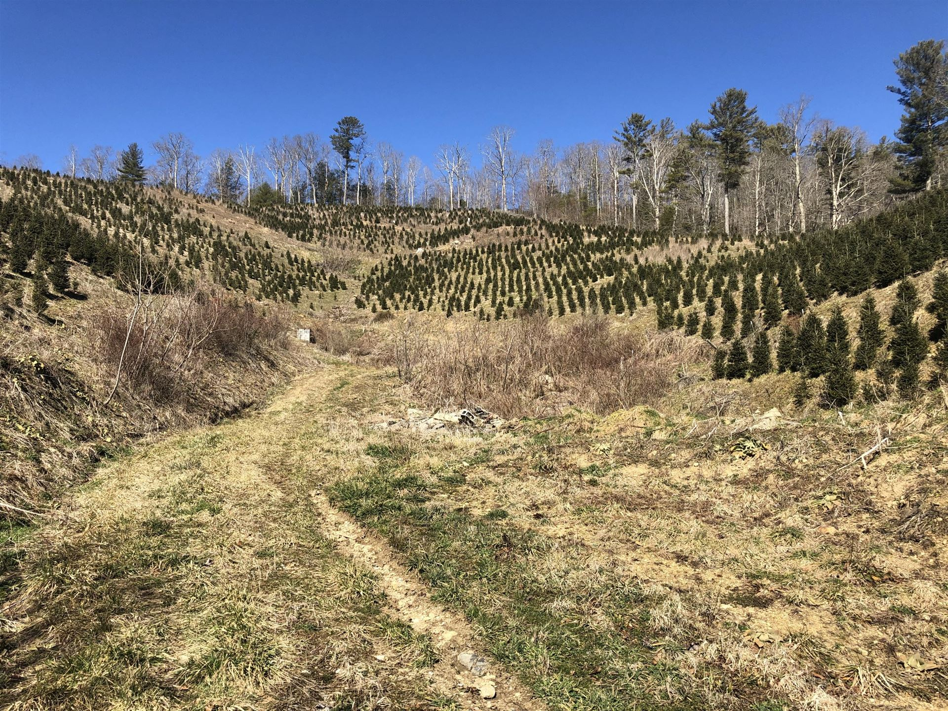 Photo of 7665 Highway 19e, Roan Mountain, TN 37687 (MLS # 9919073)