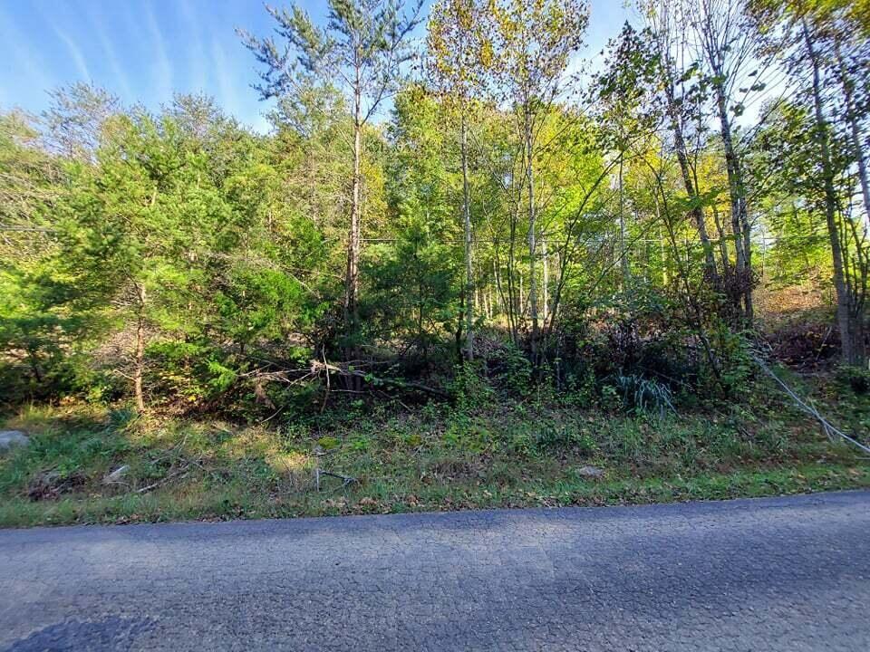 Photo of 19 Acres Gunter Corner Road, Parrotsville, TN 37843 (MLS # 9930149)