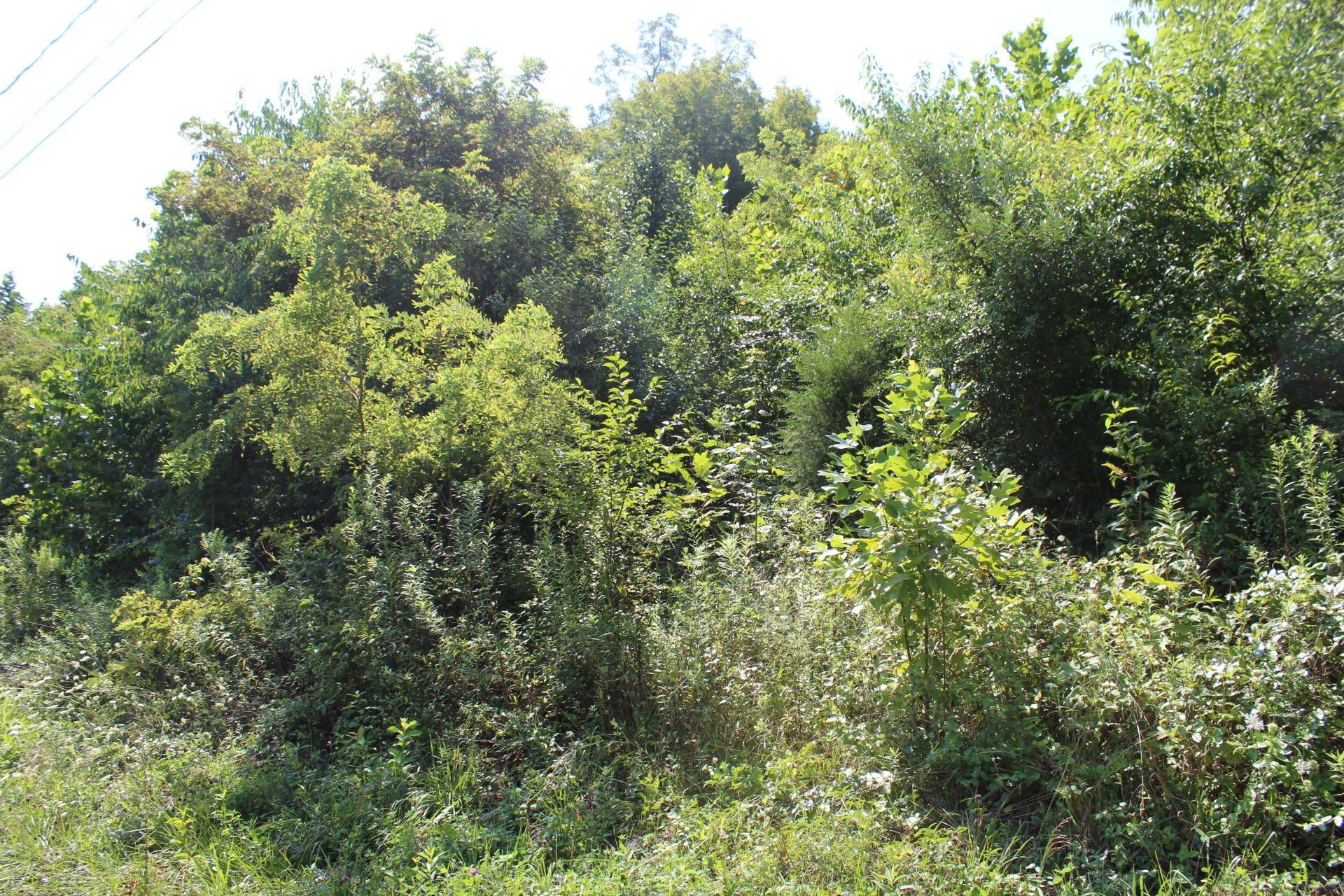 Photo of 425 Creekside Drive, Mount Carmel, TN 37645 (MLS # 9913180)