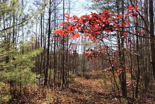 Tiny photo for 000 Divide Road, Mountain City, TN 37683 (MLS # 9915243)