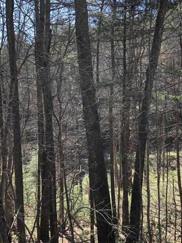 Tiny photo for Tbd North Of Forge Creek Road, Mountain City, TN 37683 (MLS # 9920268)