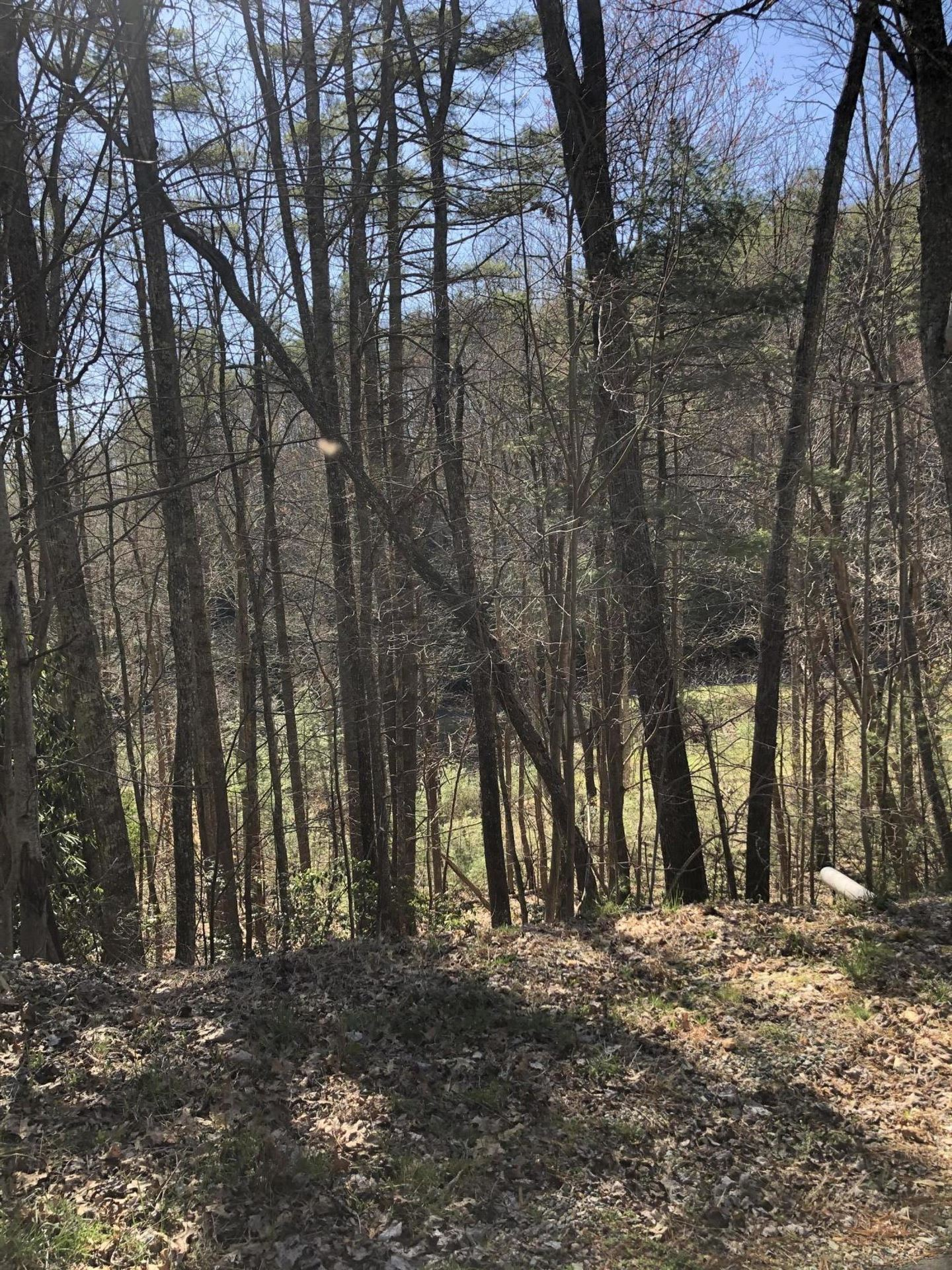 Photo for Tbd North Of Forge Creek Road, Mountain City, TN 37683 (MLS # 9920268)