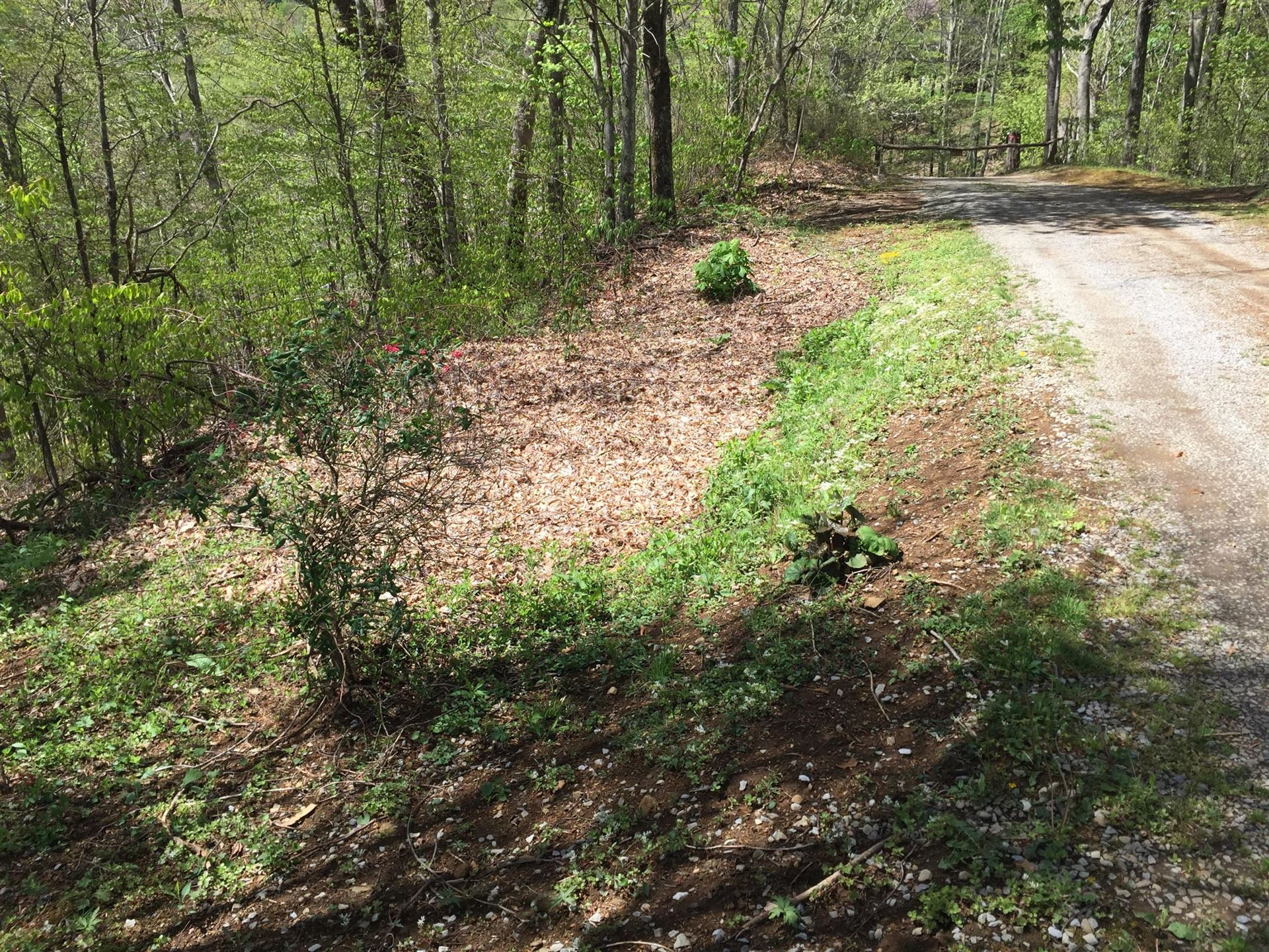 Photo of 00 St Highway 143, Roan Mountain, TN 37687 (MLS # 9922317)