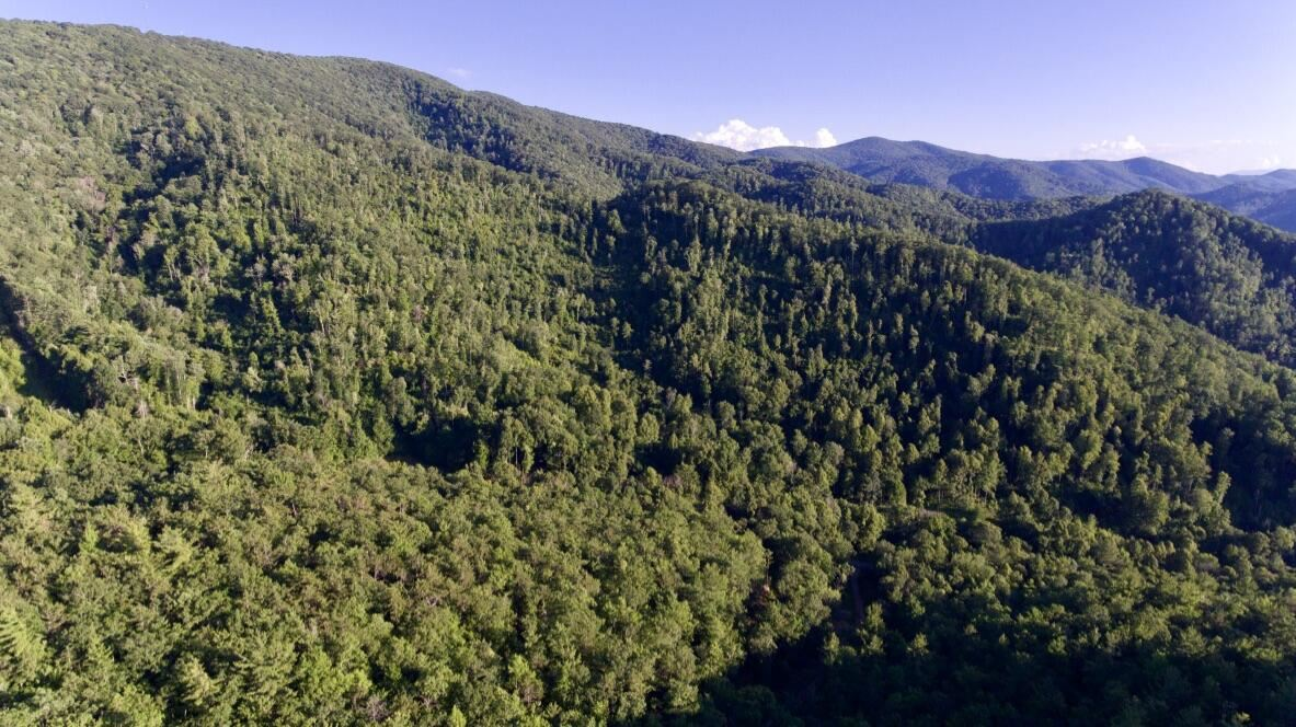 Photo of Tract 6 Off Sandy Road, Mountain City, TN 37683 (MLS # 9927341)