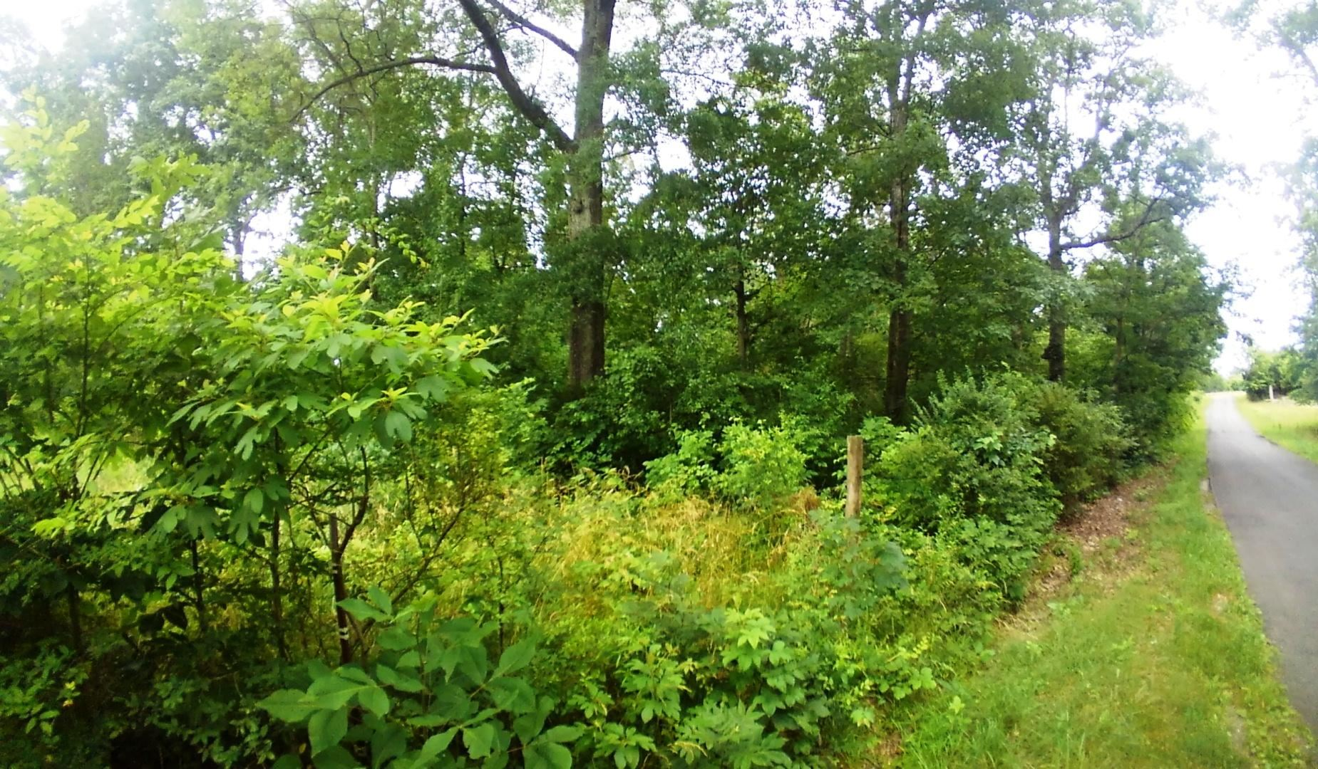 Photo of Lot 16 Smelcer Road, Mohawk, TN 37810 (MLS # 267382)