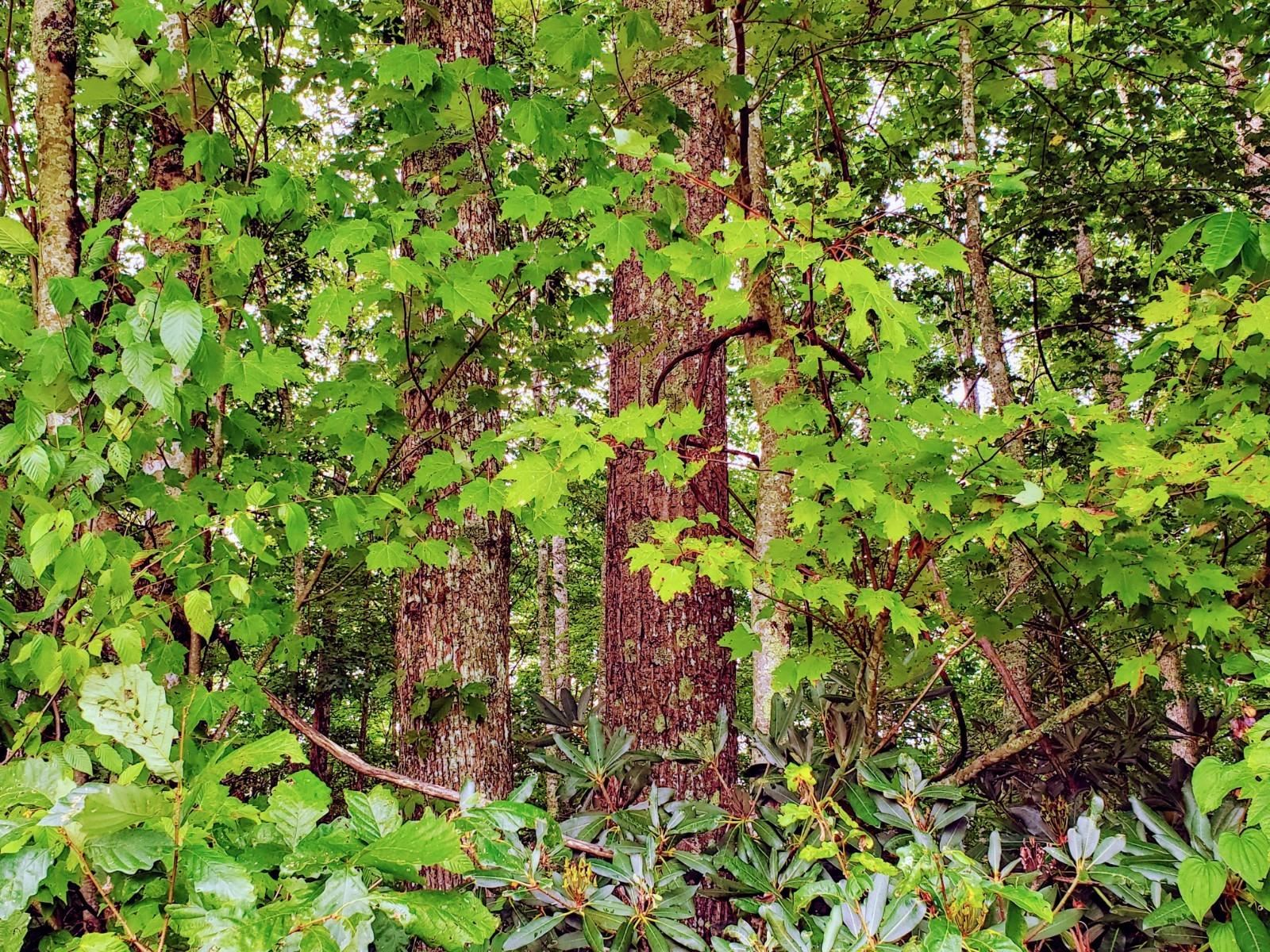 Photo of Tbd South Of Wallace Road, Shady Valley, TN 37688 (MLS # 9913416)