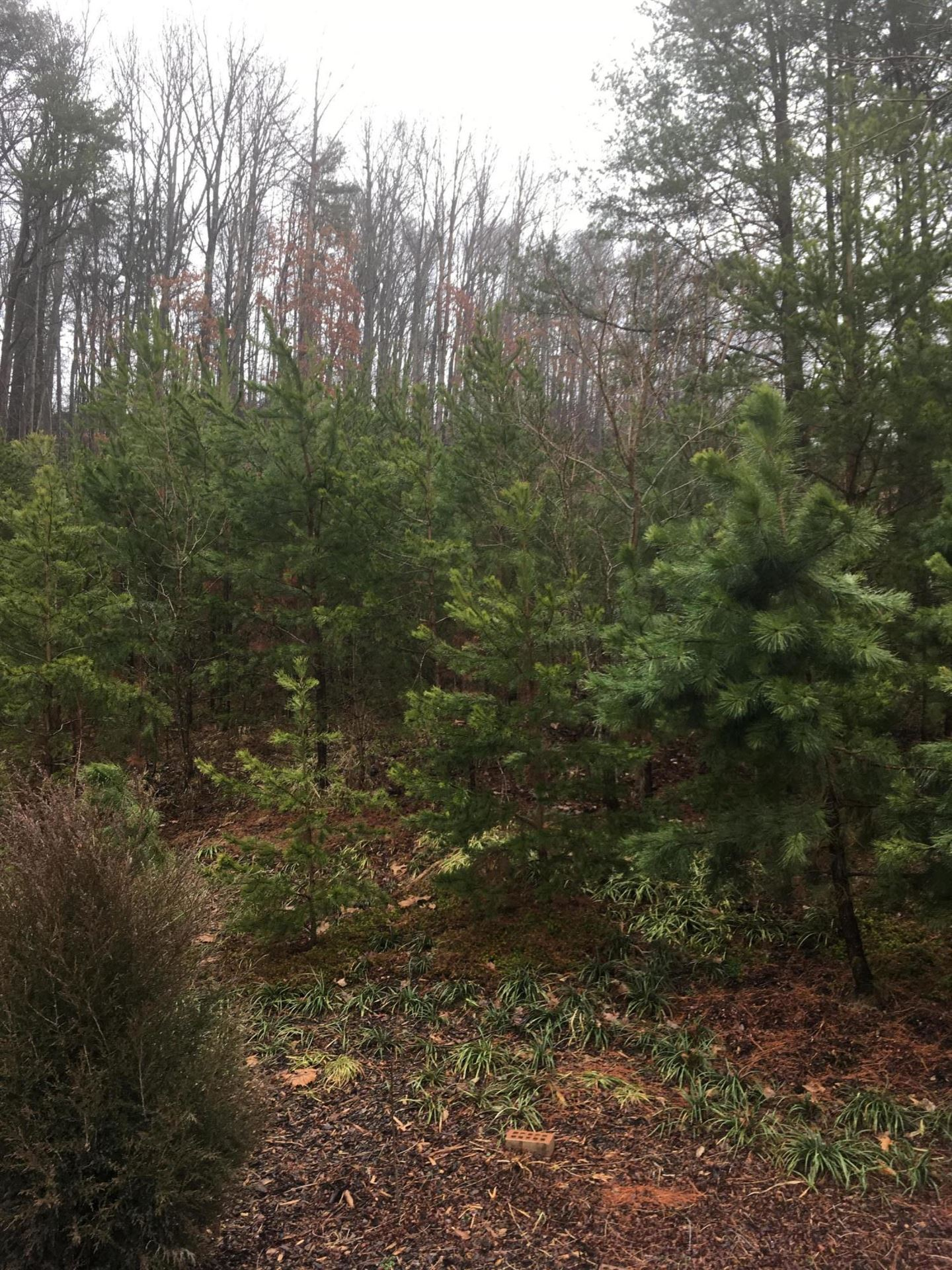 Photo of Tbd Old Moreland Drive, Kingsport, TN 37663 (MLS # 9918543)
