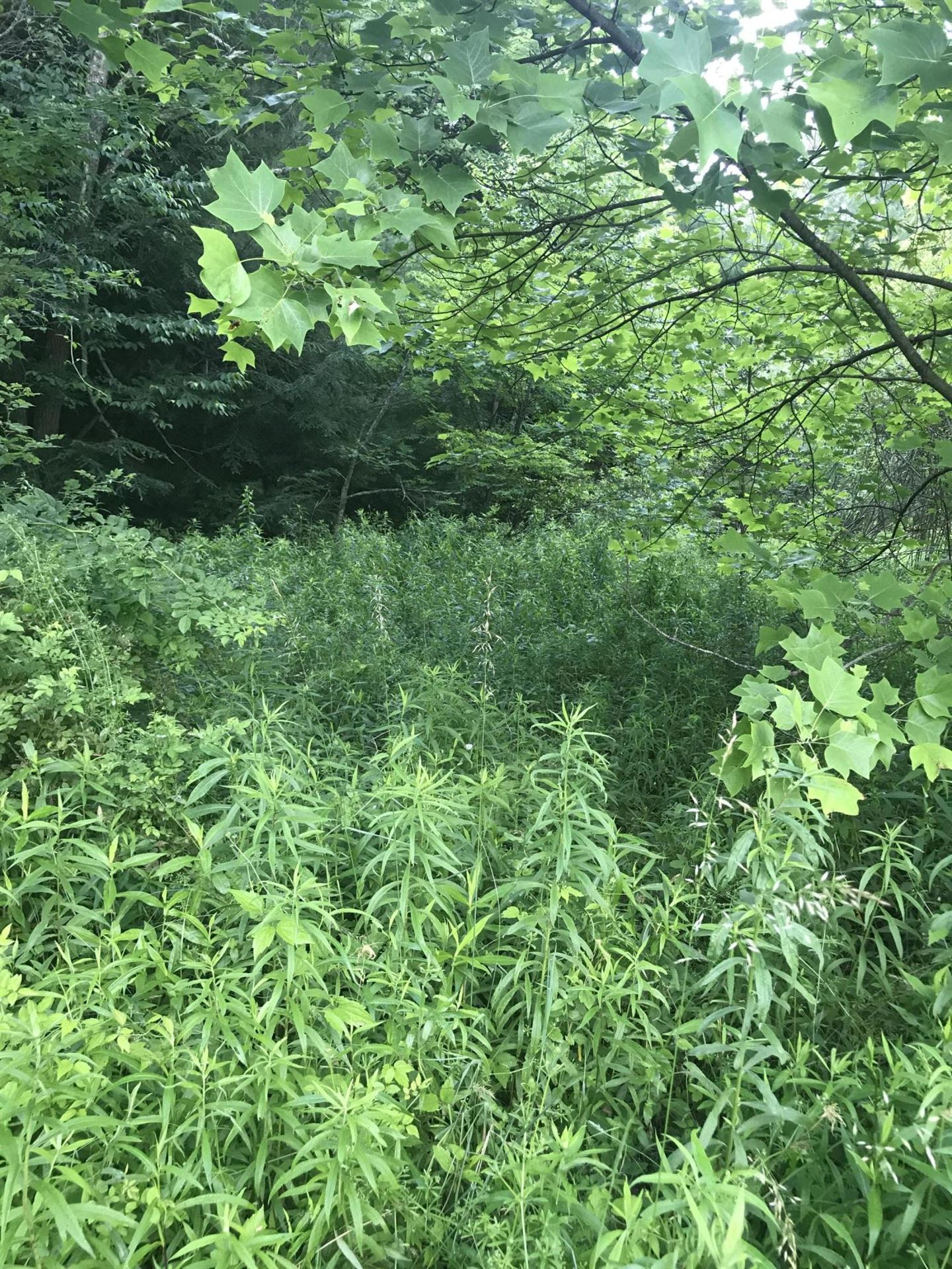 Photo of 0-0 South Hwy 421, Trade, TN 37691 (MLS # 9924569)
