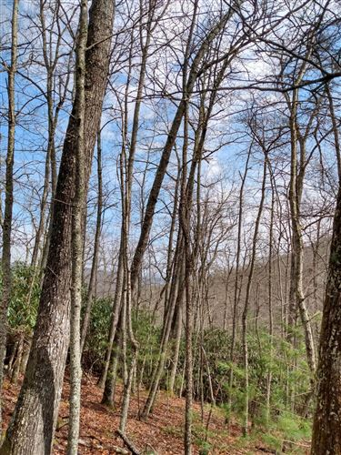 Tiny photo for 00 Preserve Private Drive, Mountain City, TN 37683 (MLS # 9919596)