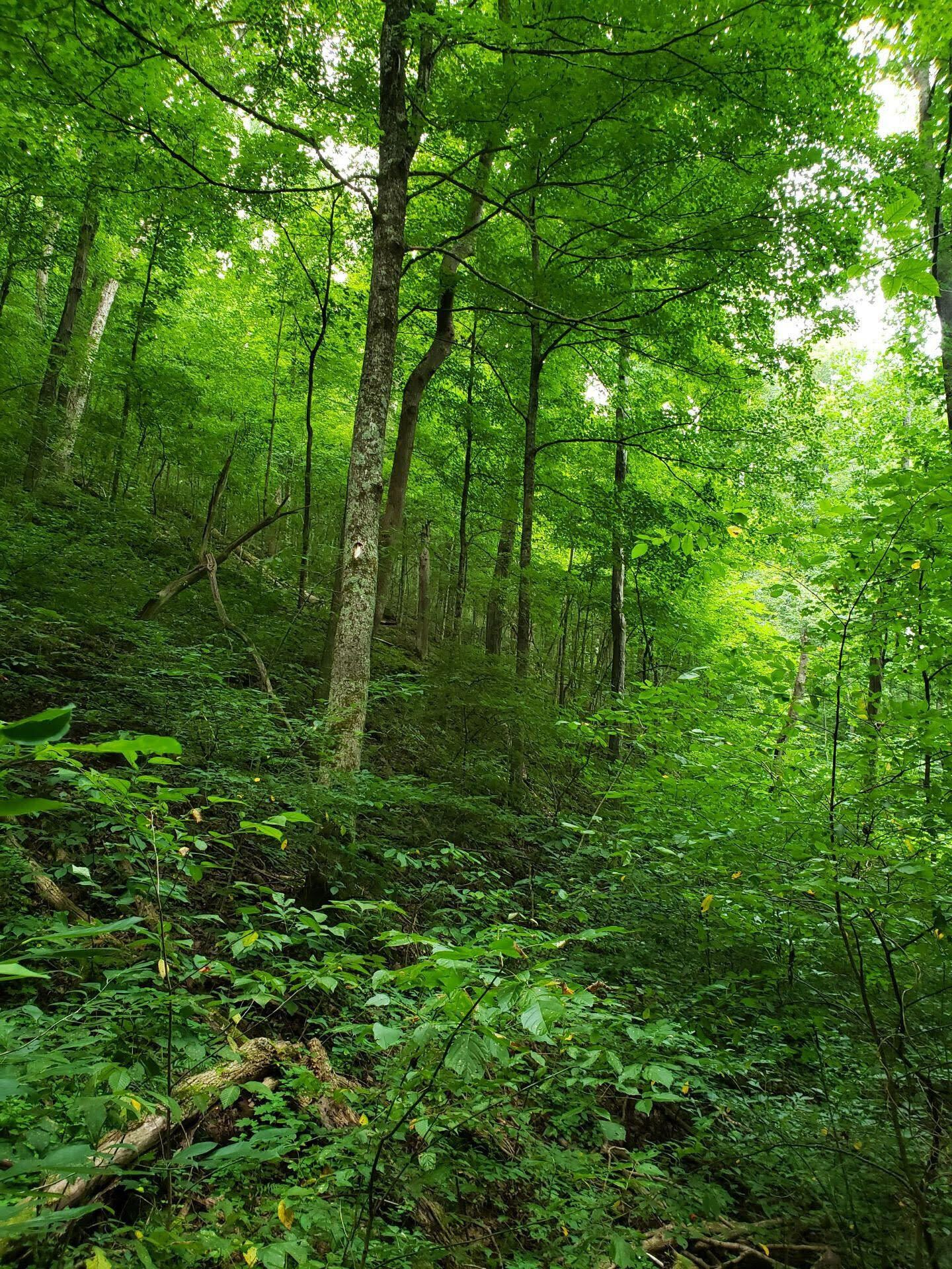 Photo of 00 Lower Caney Valley Road, Tazewell, TN 37879 (MLS # 9926613)