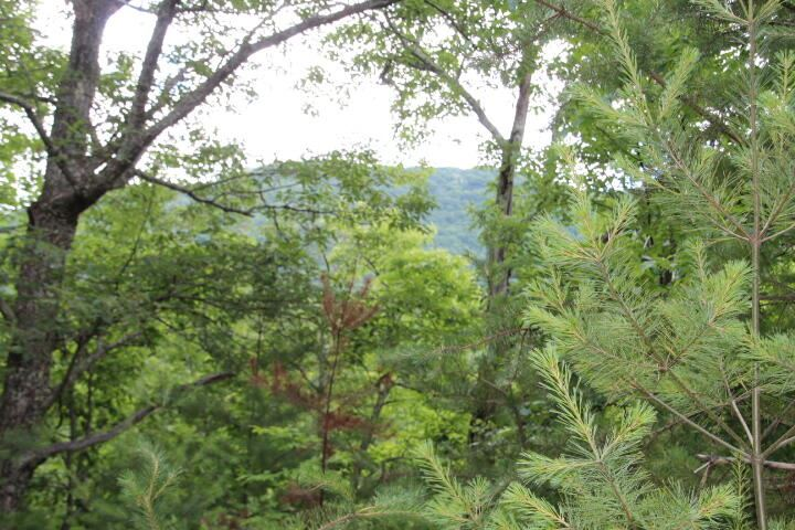 Photo for 000 Dr. Taylor Ln, Mountain City, TN 37683 (MLS # 9924642)
