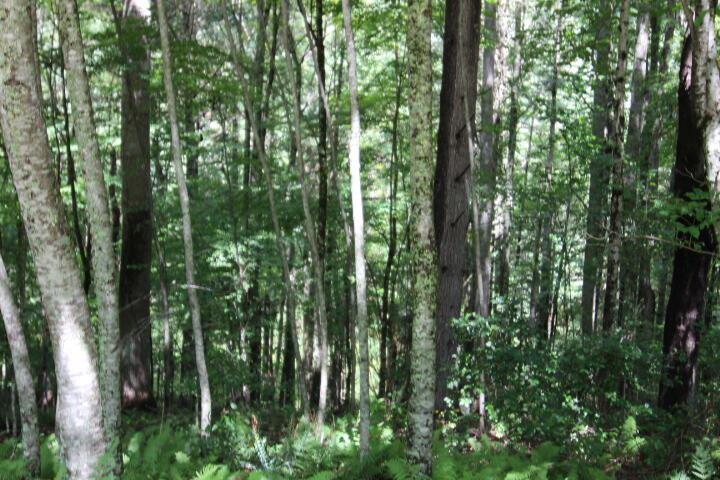 Photo of 000 Laurelwood Drive, Lot #42, Mountain City, TN 37683 (MLS # 9927669)
