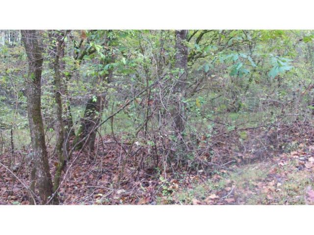 Photo of 01 TIMBER TREE BRANCH Road, Hiltons, VA 24258 (MLS # 9901778)