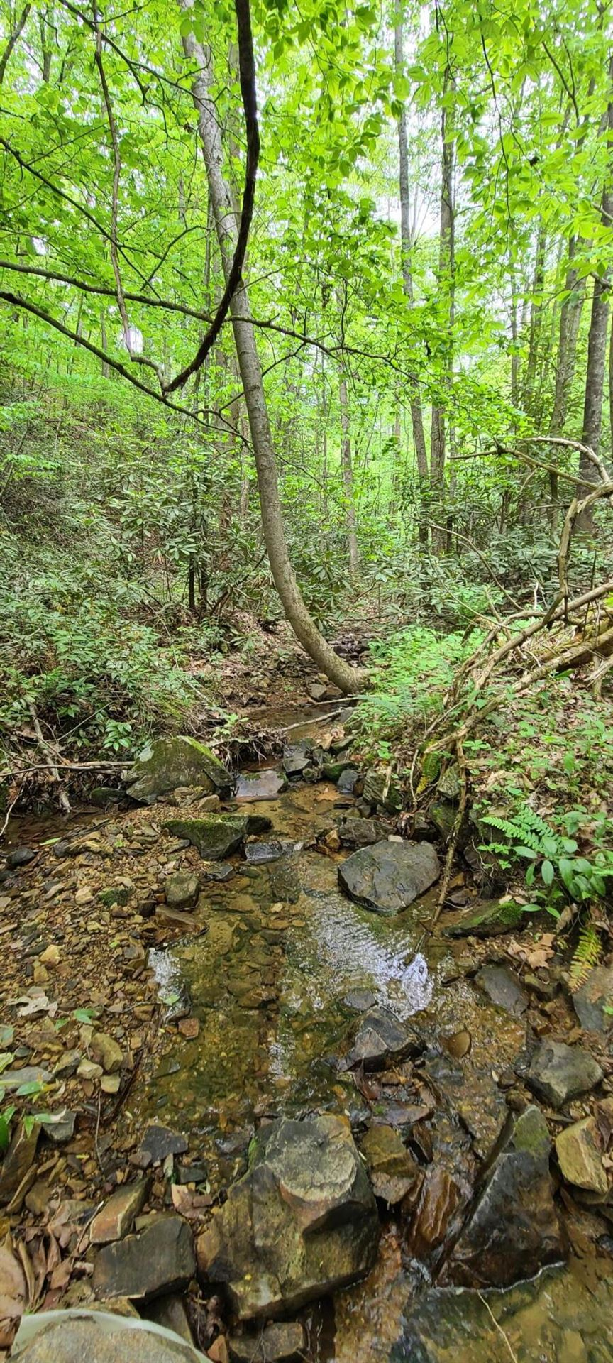 Photo of Tbd 21 Acres Bailey Hollow Road, Erwin, TN 37650 (MLS # 9922786)