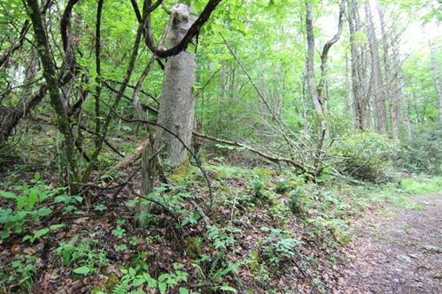 Tiny photo for 000 Forester Hollow Lane, Mountain City, TN 37683 (MLS # 9923800)